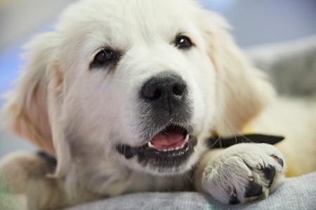 Snídaně s Novou má nového člena týmu. Je to štěně, které bude pomáhat!