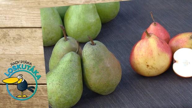 Hrušky v zimě? Na těchto odrůdách si můžete pochutnat i teď!