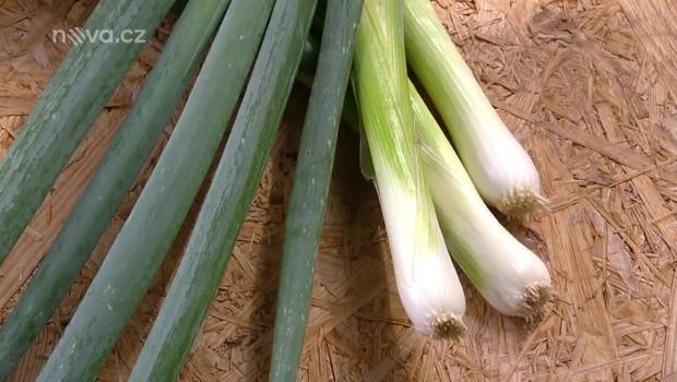 Rady ptáka Loskutáka - Celer a cibule