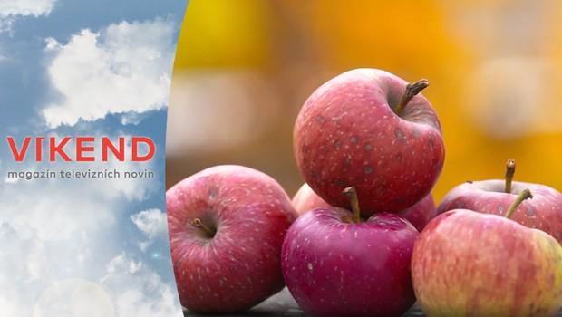 Obáváte se sklízet ovocné plody ve městě? Nechali jsme otestovat jejich kvalitu!