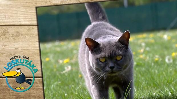Zdraví zvířecích mazlíčků začíná v misce. Dbejte na dodržování pitného režimu