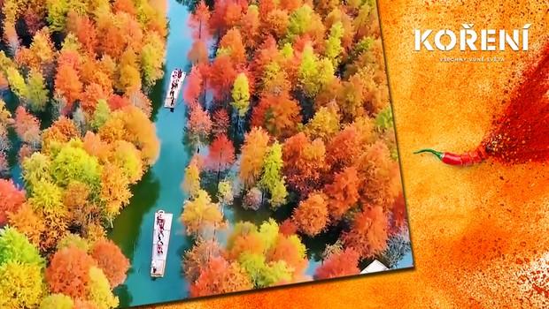 Jedinečný záběr: Sekvojový les v čínské provincii hraje všemi barvami