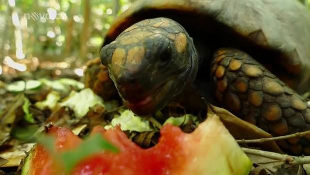 Koření - Spasitel želv