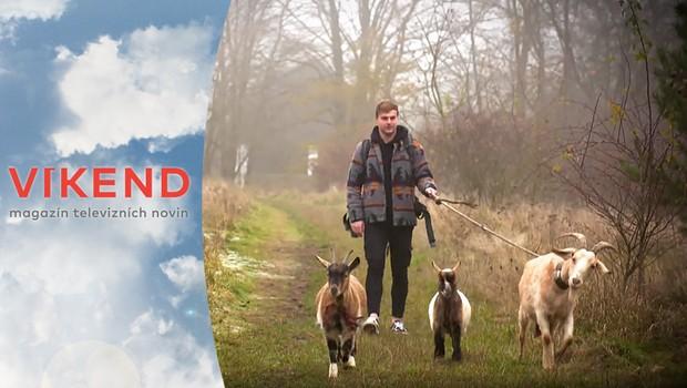 Kozí výprava: Zažijte neobyčejný výlet do přírody s těmito inteligentními zvířaty!
