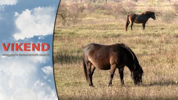Víkend - Koně z Milovic