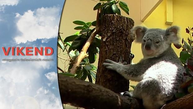 Víkend - Vídeňská zoo