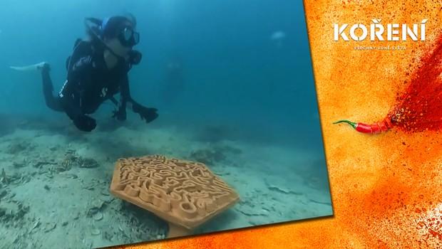 Křehcí koráli vymírají. Asijští vědci pro ně vyrábí speciální hotely!