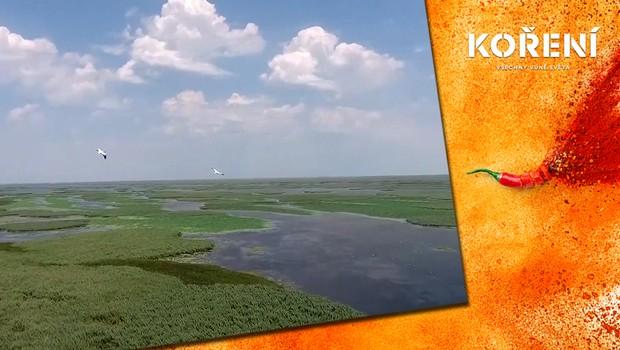 Jedinečná přírodní rezervace. Delta Volhy je domovem mnoha druhů zvířat a rostlin