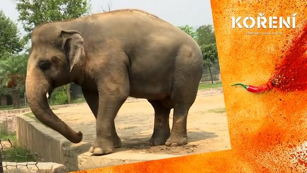 Příběh se šťastným koncem: Osamělý slon se konečně dočká vytoužené svobody!