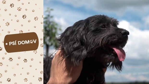 Majitel o Růžence: Kdo by chtěl takhle hnusnýho psa?! Najde se nový páníček?