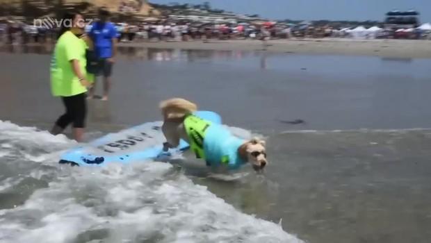 Koření - Surfující psi
