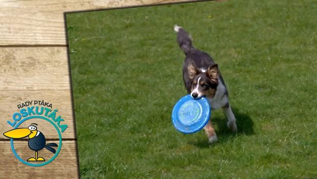 Jak má vypadat denní režim psa? Berte v potaz jeho rasu, věk a aktivitu během dne