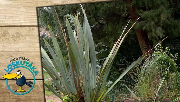 Vaše zahrádka se může pyšnit rostlinami z jižní polokoule. Jak je to možné?