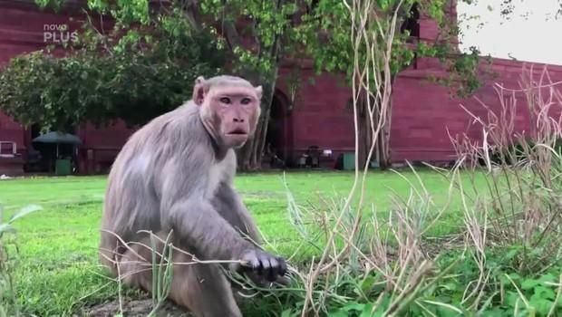 Koření – Opičí problémy