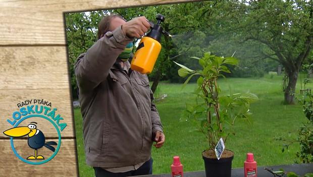 Nedostatek železa u rostlin: Jak se projevuje a jak tomu můžete předejít?