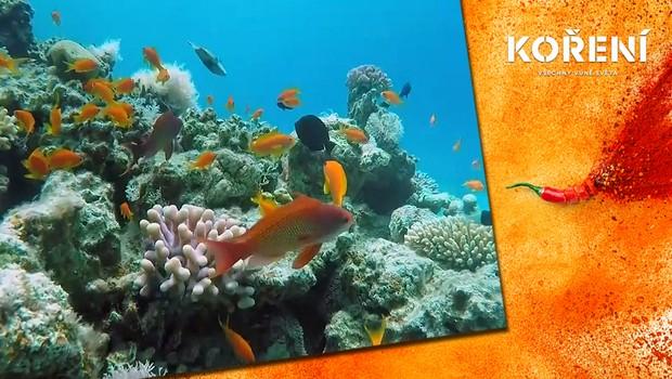 Klimatické změny a turisté ničí korálové útesy. Jak se je snaží místní zachránit?