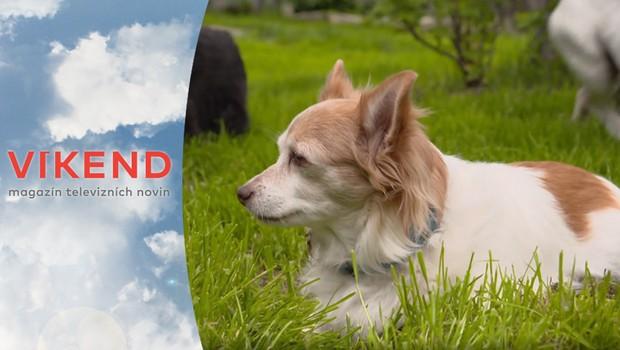 Psí speciál: Podle čeho si vybírat psa, který bude vhodný právě pro vás?