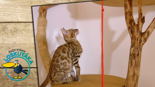 Rady ptáka Loskutáka - Kočičí hračky
