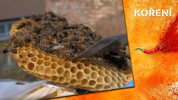 Včely našly útočiště v centru Londýna. Proč bychom si jich měli více vážit?