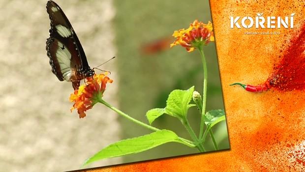 Neobvyklé povolání: Ženy v Keni se živí chytáním motýlů!