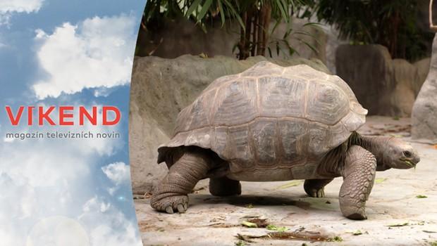 Zvířatům v zoo se stýská po návštěvnících! Jak koronavirus ovlivnil jejich životy?