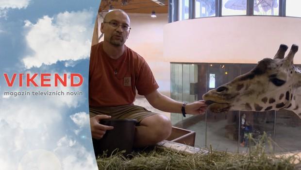 Jak vypadá práce veterináře v pražské zoo? Tento muž zasvětil svůj život zvířatům