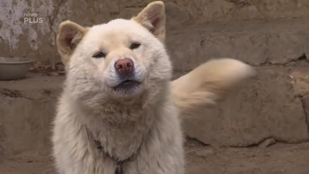 Koření – Pes jako ikona