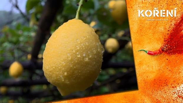 Podnikání v krizi: O citrony z rodinné farmy není kvůli pandemii zájem