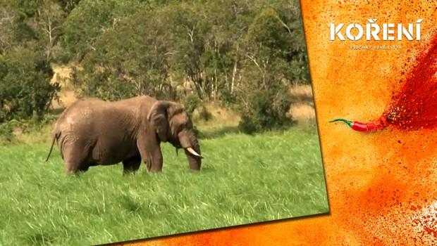 Koření - Poslední slon