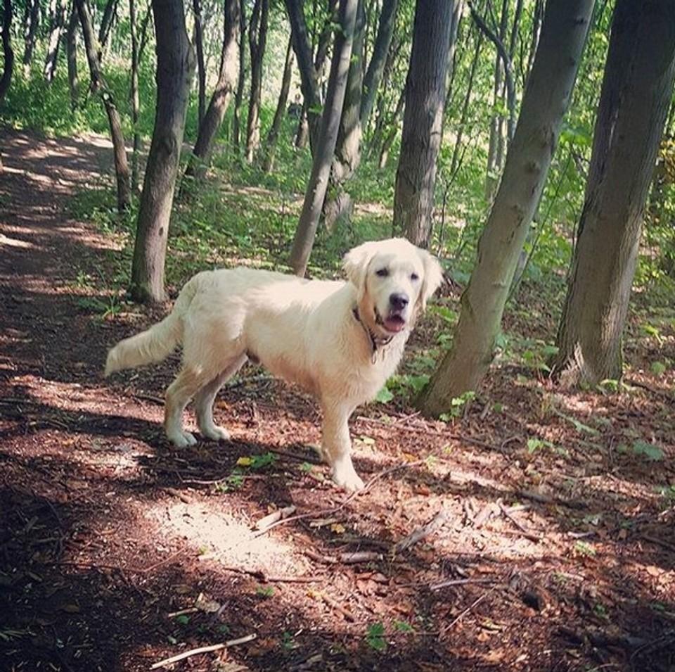Sunny a jeho první narozeniny - 9