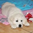 Sunny a jeho první narozeniny - 1