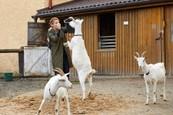 Ordinace: Heluš válčí s kozami! - 14