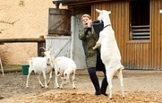 Ordinace: Heluš válčí s kozami! - 15