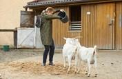 Ordinace: Heluš válčí s kozami! - 1